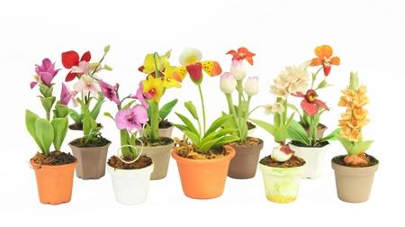 various flower in flowerpot on white background, isolated Stock Photo