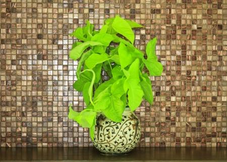 verdant plant in flowerpot on wood bar
