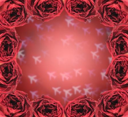 red rose bokeh: beautiful dry red rose frame on blur airplane bokeh background