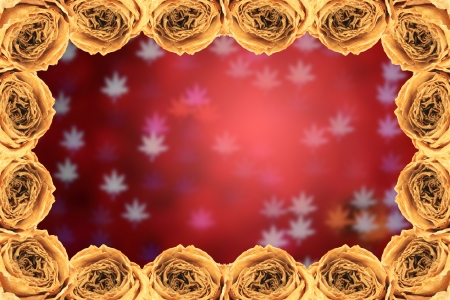 red rose bokeh: beautiful dry white rose frame on blur maple leaves bokeh red background Stock Photo