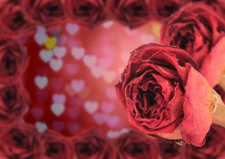 red rose bokeh: dual beautiful dry red rose with frame on blur heart bokeh background