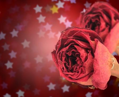 red rose bokeh: dual beautiful dry red rose on blur star bokeh background