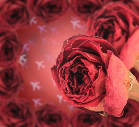 red rose bokeh: dual beautiful dry red rose with frame on blur airplane bokeh background