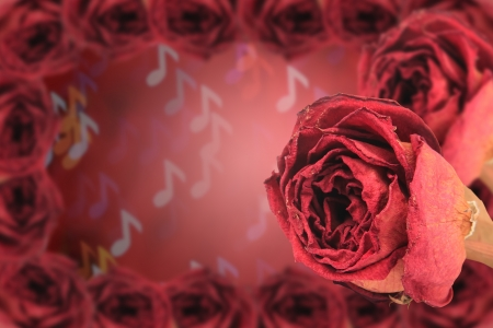 red rose bokeh: dual beautiful dry red rose with frame on blur note bokeh background