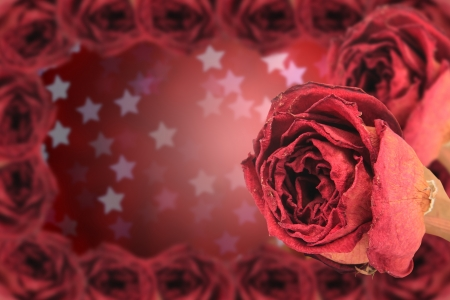 dual beautiful dry red rose with frame on blur star bokeh background photo