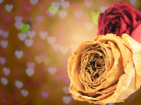 red rose bokeh: dual beautiful dry white & red rose on blur heart bokeh background Stock Photo