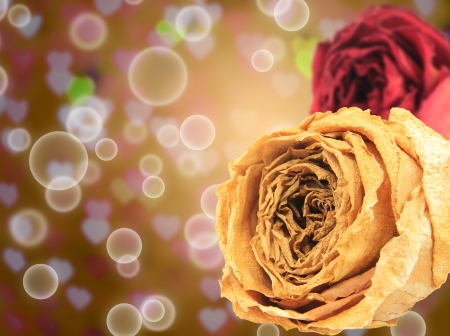 red rose bokeh: beautiful dry white and red rose on bubble with blur heart bokeh gold background Stock Photo