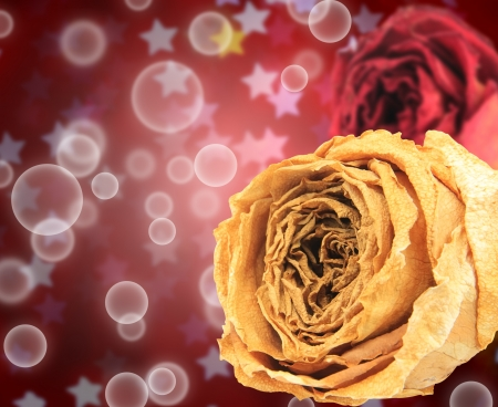 red rose bokeh: beautiful dry white and red rose on bubble with blur star bokeh background Stock Photo