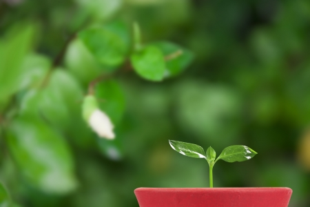 plentifully: green seedling in flowerpot on verdant garden background
