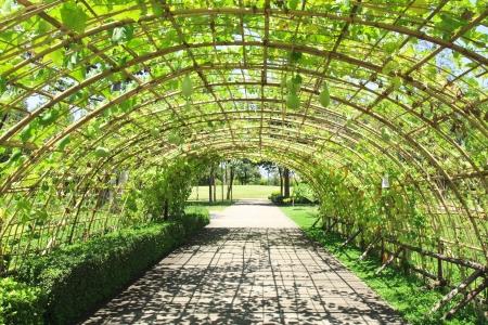cucurbit: fresh cucurbit tunnel garden on bright sky
