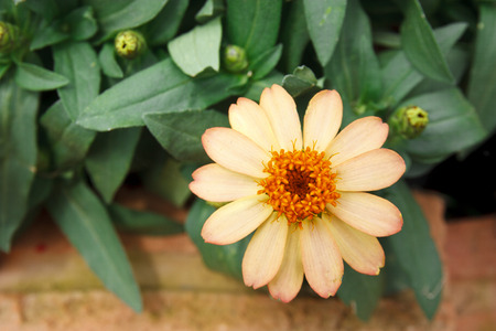 bloom flower in the garden