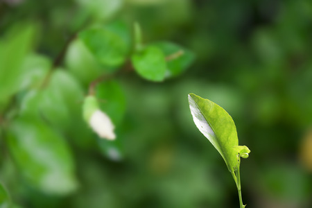 plentifully: green seedling on plentifully nature background