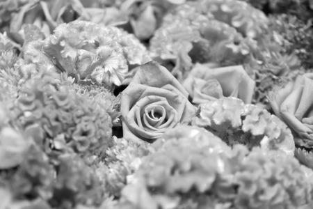 roses with other flowers on mono tone for background