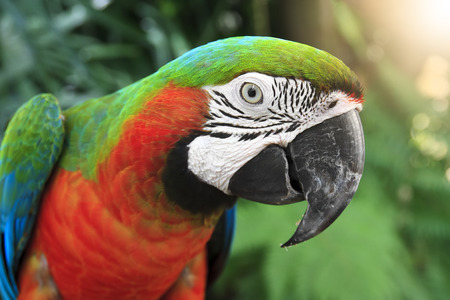 close-up eye and head of parrot at the jungle or zoo with flare and sunlight