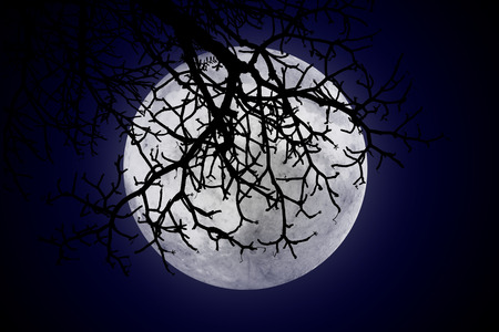 night sky stars: halloween or ghost style, The moon is behind the shadows of twigs on empty dark sky at night