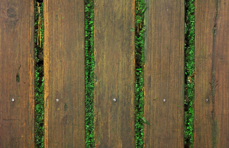 old wood pathway, floor, table or wall on top view with green moss plant in the plentiful jungle or forest for background or scene