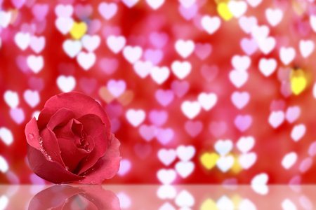 fresh beautiful red rose petal and aroma with drop of water for love flower or valentine day on red heart bokeh background with reflection shadow on glass table and copyspace