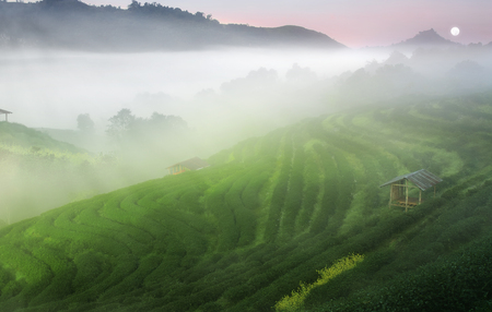 green tea with sea of mist or fog on sunrise beam and old wooden cottage on warm sky and full moon for morning landscape top of the mountain at tea farm 2000 in Doi Ang Khang on winter for dream scene