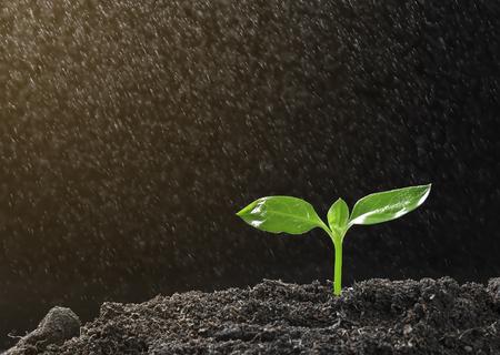 自然や環境を維持するために植林する緑色植物のための土で木に水をまくと種からの成長