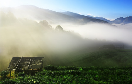 green tea and sea of mist or fog on top of mountain morning landscape with sunrise beam and old wooden cottage on blue sky at tea farm 2000 in Doi Ang Khang on winter for background or dream scene Stock Photo