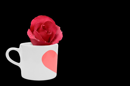 fresh beautiful red rose and aroma with drop of water for love flower or valentine day in white cup with red heart paint isolated on black background and copyspace