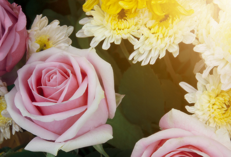 fresh beautiful pink rose for love and yellow chrysanthemum bouquet flower with sunlight on winter floral festival and valentine day for background Stock Photo