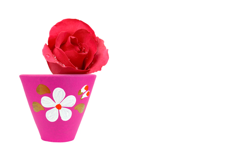 fresh beautiful red rose petal and aroma with drop of water for love flower or valentine day in pink pottery flowerpot with flower paint on white background isolated and copyspace