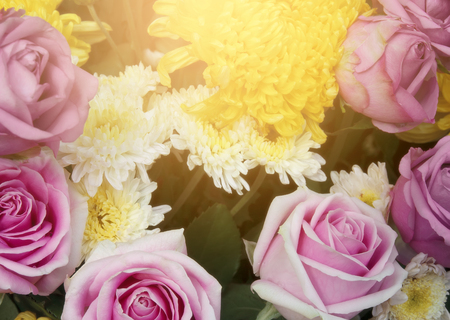 fresh beautiful pink rose and fragrance for love and yellow with white chrysanthemum bouquet flower and sunlight on winter floral festival garden and valentine day for background Stock Photo