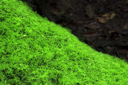 green moss plant on stub or tree root in the deep jungle or forest and plentiful environment for nature background with copy space for your text