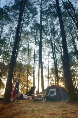 nature camping tent with green tree on grass or lawn with camp equipment in pine forest national park with morning warm sunlight for family vacation picnic on holiday relax travel at Phu Hin Rong Kla Stock fotó