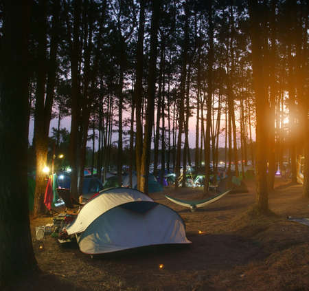 nature camping tent with tree on grass with camp equipment in pine forest national park on twilight sunset and sunlight to warm white light on lantern yellow lamp for family vacation on holiday travel Stock fotó