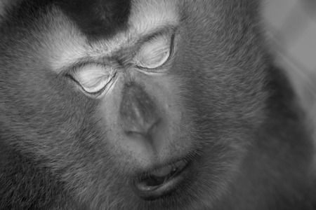 cage gorilla: Monkey sleep