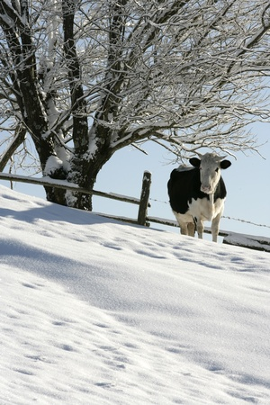 Pasture photo