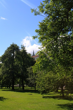 Beautiful summer park and blue sky photo
