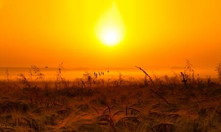 Sunlight photo