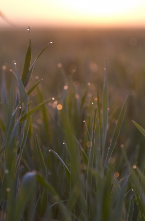 Dewdrops on the  grass photo