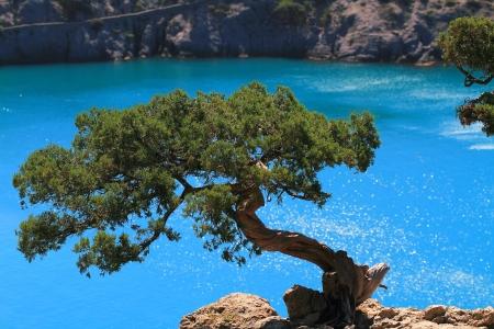 water s edge: Albero e laguna