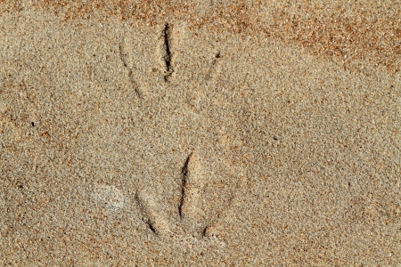 Seagul s footprint on the sand photo