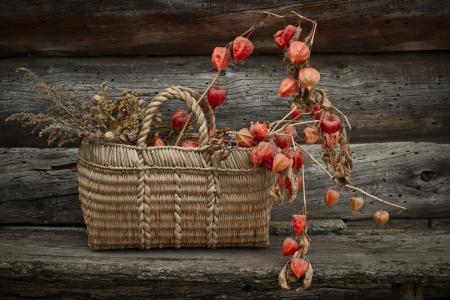 birchbark: Dry flowers in the birchbark basket