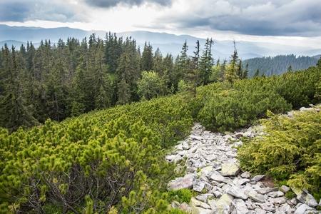 Ukrainian Carpathian Mountains Stock Photo