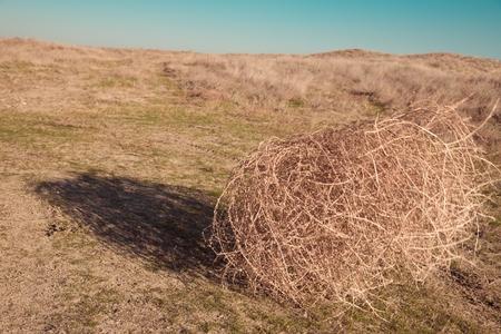 Tumbleweed on the field Stock Photo