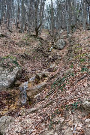 Small mountain stream photo