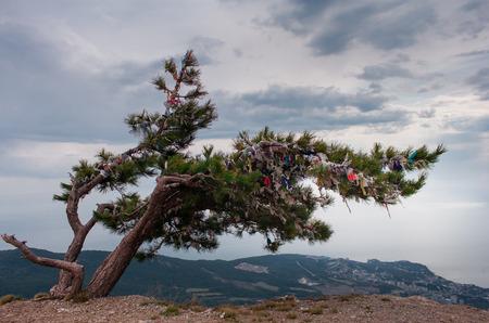 Wish tree branches with colorful ribbons. Ai-Petri, Crimea. photo