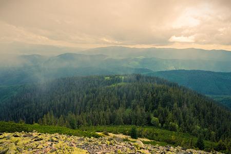 tree  pine: Los C�rpatos ucranianos, vista desde la cima de la monta�a de Dovbushanka