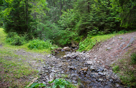 carpathian: Small Carpathian stream