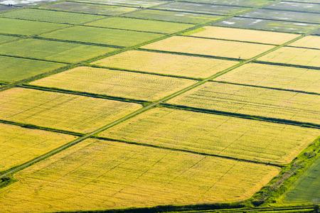 Cultivation of cereals. Krasnodar region top view Stock Photo