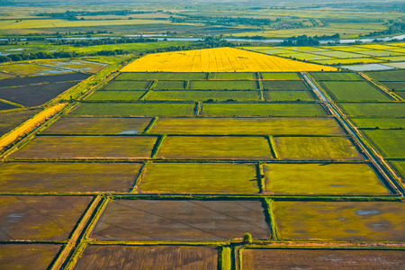 krasnodar: Cultivation of cereals. Krasnodar region, top view