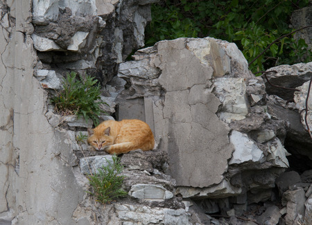 The red cat sleeping on ruins at home Stock Photo
