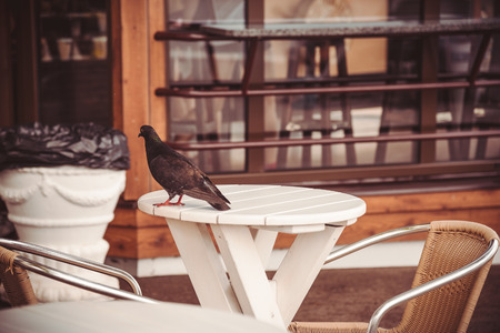 little table: Pigeon on a little table in street cafe Stock Photo