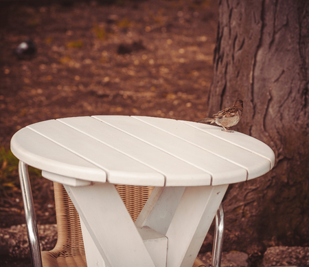 little table: Sparrow on a little table in street cafe